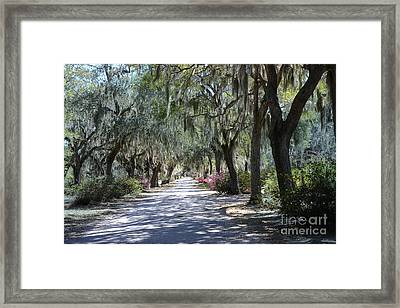 Savannah Georgia Gothic Cemetery Bonaventure Spanish Moss Trees - Hanging Spanish Moss Trees Framed Print by Kathy Fornal