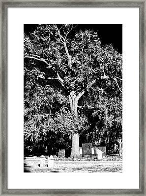 Savannah Graves Framed Print by John Rizzuto