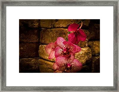 Savannah Grey Orchid Framed Print by Richard Kook