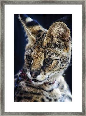 Savannah Jungle Cat Framed Print