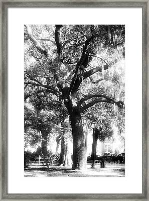 Savannah Oak Framed Print