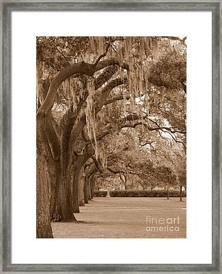 Savannah Sepia - Emmet Park Framed Print by Carol Groenen