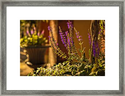 Savannah Sidewalk Framed Print by Diana Powell