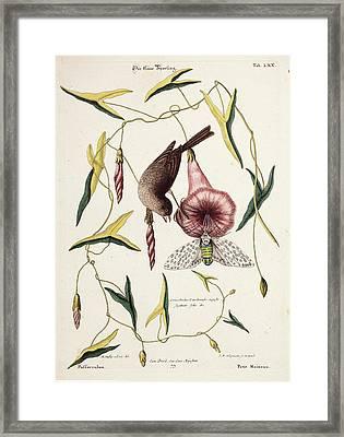 Savannah Sparrow And Cicada Framed Print