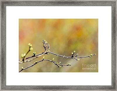 Savannah Sparrow Impression Framed Print by Ilene Hoffman