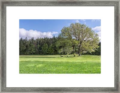 Save My Tree Framed Print by Jon Glaser