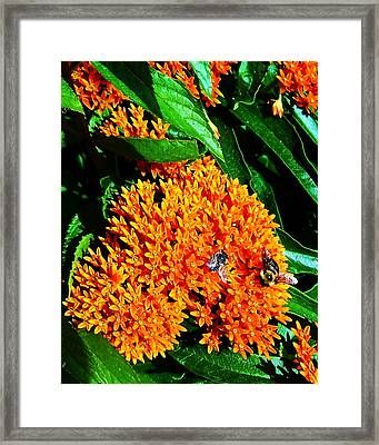 Framed Print featuring the photograph Save Our Bees by Yolanda Raker
