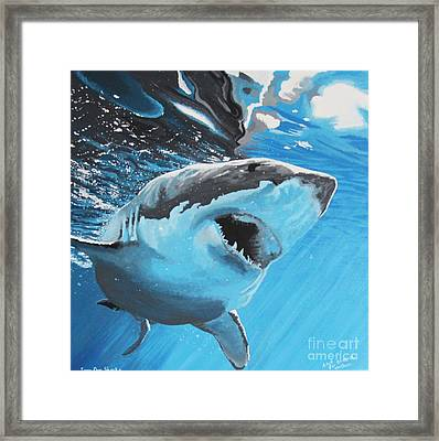 Save Our Sharks Framed Print by Robert Timmons