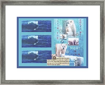 Save The Polar Bear Now Or Never Framed Print