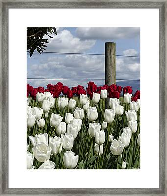 Saving Graces Framed Print by Jordan Blackstone