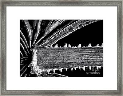 Saw Palmetto 1248 Framed Print by Walt Foegelle