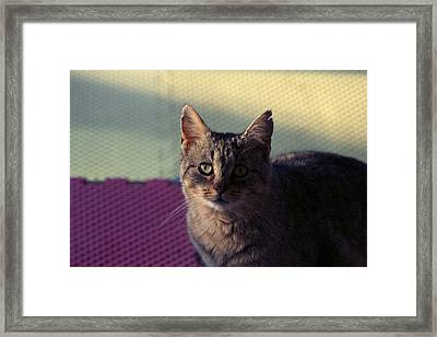 Saw Tooth Framed Print
