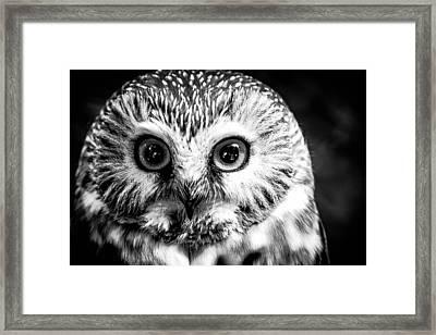 Saw-wet Owl Framed Print
