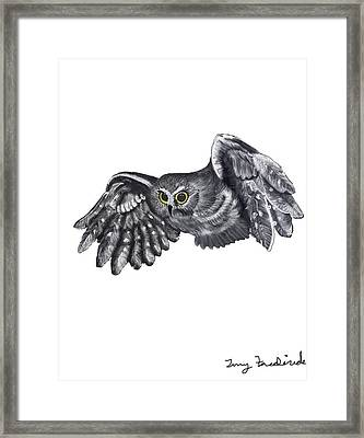 Saw-whet Owl Framed Print