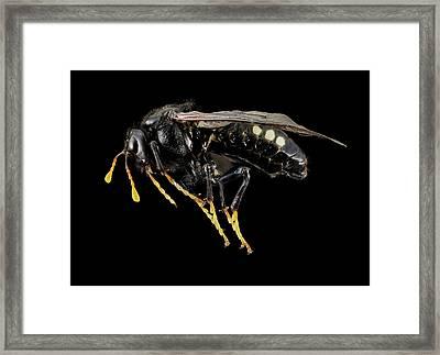 Sawfly Framed Print