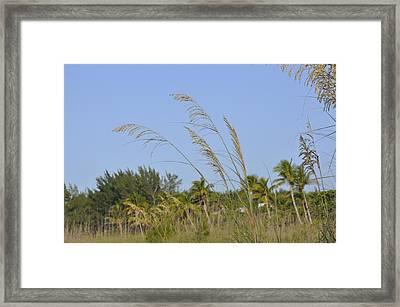 Sawgrass  Framed Print