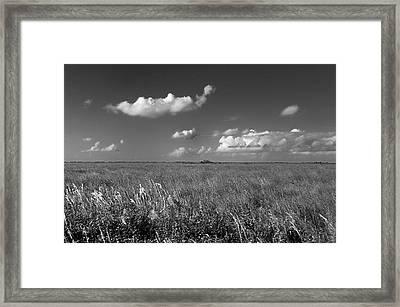 Sawgrass Prairie  Framed Print by Andres LaBrada