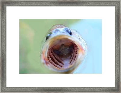 Say Aaahhhh Framed Print