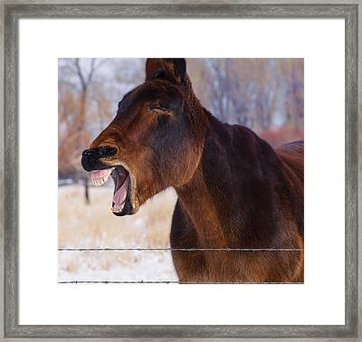Say Ahhhh Framed Print