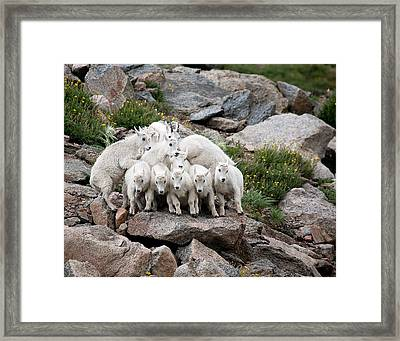 Say Cheese Framed Print by Jim Garrison