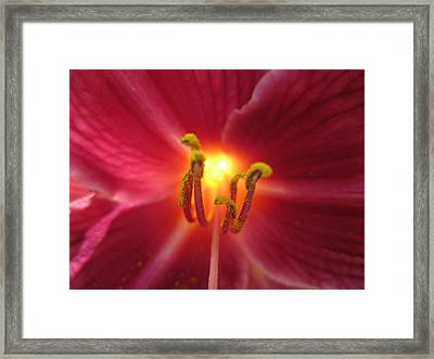 Say Hello Framed Print by Mike Podhorzer