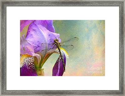 Say Hello To Spring Framed Print by Jai Johnson
