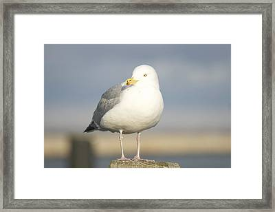Say What  Framed Print by Eugene Bergeron