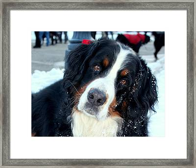 You Said You Love Me Framed Print by Fiona Kennard