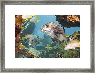 Say What Framed Print by Paula Porterfield-Izzo
