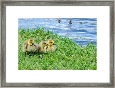 Framed Print featuring the photograph Staying Together by Steven Santamour