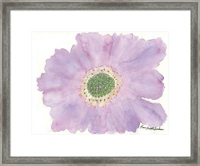 Scabiosa Framed Print