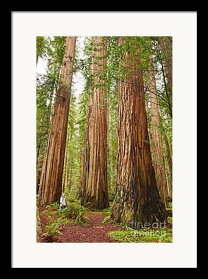 Redwood Framed Prints