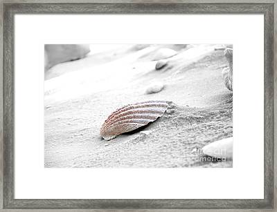 Framed Print featuring the photograph Scallop Shell by Robert Meanor