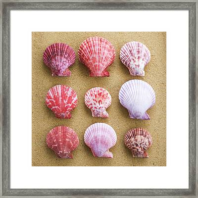 Scallop Shells In Rows Framed Print