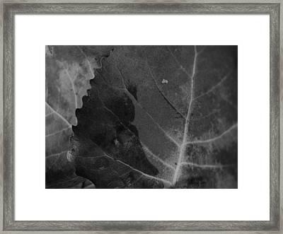 Scalloped Framed Print by Tim Good