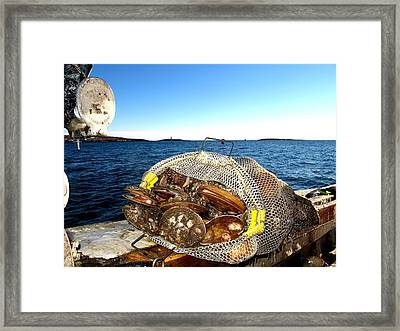 Scallops Bounty Of The Sea Framed Print
