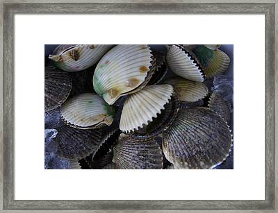 Scallops Framed Print by Laurie Perry