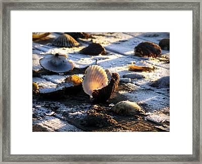 Half Shell On Ice Framed Print by Karen Wiles