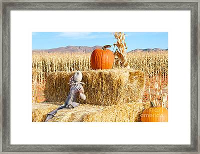 Framed Print featuring the photograph Scarecrow Breaktime by Vinnie Oakes