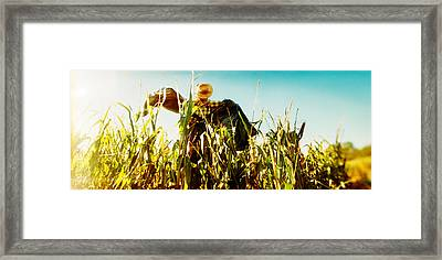 Scarecrow In A Corn Field, Queens Framed Print by Panoramic Images