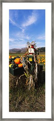Scarecrow In Pumpkin Patch, Half Moon Framed Print by Panoramic Images