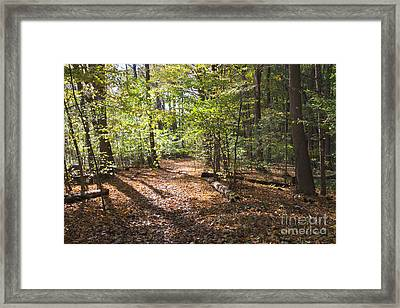 Scared Grove 2 Framed Print