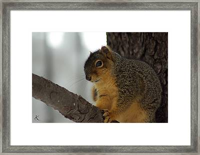 Scared Squirrel Framed Print
