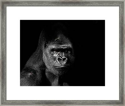Scarface Framed Print by Jim Garrison