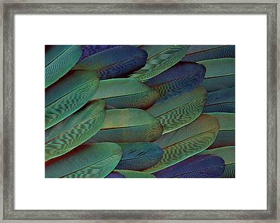 Scarlet And Blue Gold Macaw Wing Framed Print by Darrell Gulin