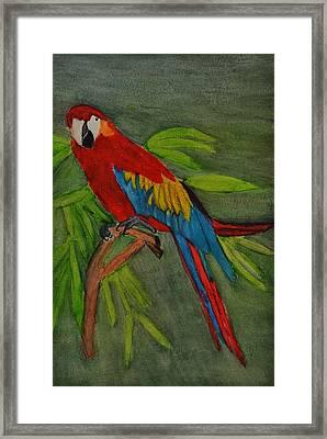 Scarlet Mccaw Framed Print by Linda Brown