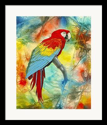 Central American Wildlife Framed Prints