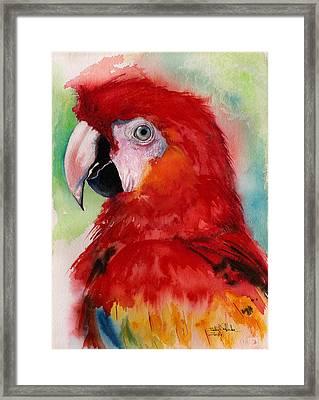 Scarlet Macaw Framed Print by Isabel Salvador