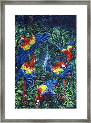 Scarlet Macaw Jungle Framed Print by Larry Taugher