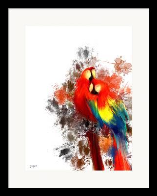 Scarlet Macaw Framed Prints